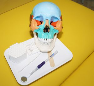Anatomie Schädel